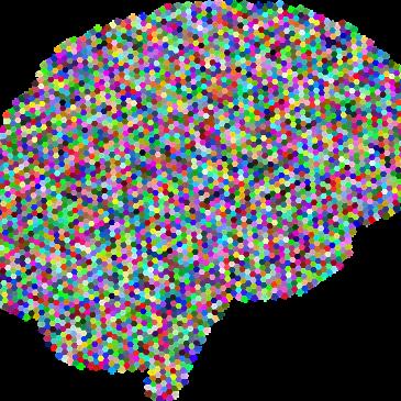 Rabdomancija 6 – funkcija mozga